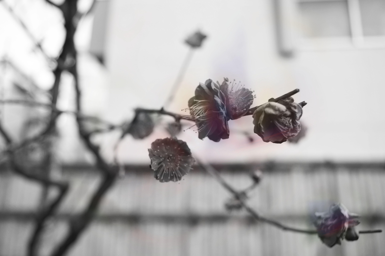 花のにおい